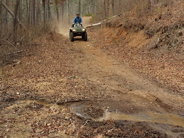 Ozark National Forest has four wheeler trails to enjoy year round