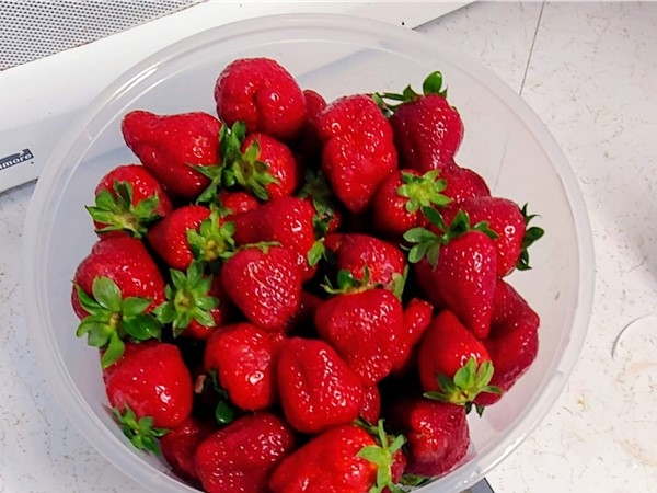Holland Bottom strawberries