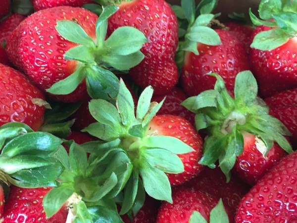 It's that time again! Arkansas strawberries found in Midtown parking lot! Time for shortcake