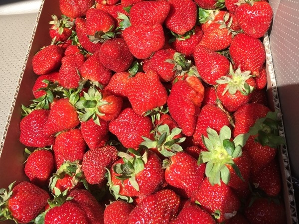 Arkansas strawberries! The best! Come join the festivities at the annual Strawberry Festival