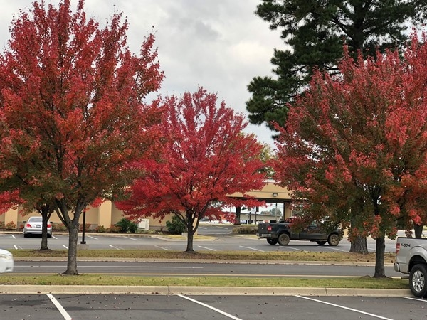 Autumn colors in Russellville