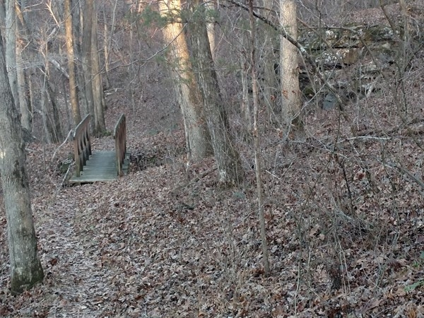 One of the two trail bridges on the hike between Pruitt and Camp Orr