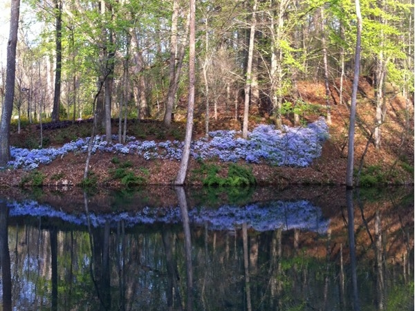 Reflections on the trails at Crystal Bridges Museum