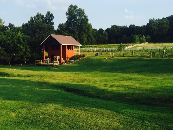 Sassafras Vineyards is perfect for an event venue or just a cool place to spend the afternoon